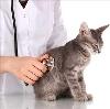 Ветеринарные клиники в Пучеже